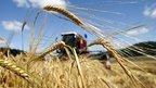 Селекторное совещание о ходе сельскохозяйственных уборочных работ в 2015 году