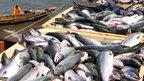 Совещание о перспективах развития рыбохозяйственного комплекса