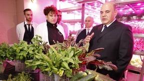 Посещение тепличного комплекса по выращиванию овощей защищённого грунта в Анадыре
