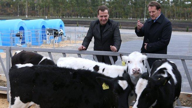 Посещение животноводческого комплекса ООО «ЭкоНиваАгро»