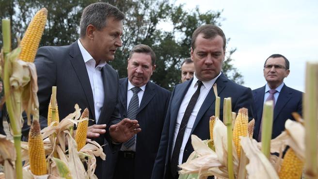 Ознакомление с ходом уборки урожая кукурузы